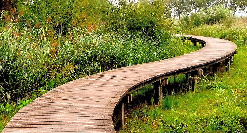 Ga iedere dag even 30-60 minuten naar buiten en zoek de natuur op. Mits je gepaste afstand houdt en je zelf ook gezond bent.