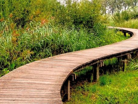 Natuur bij je thuis versterkt je mentale en fysieke gezondheid