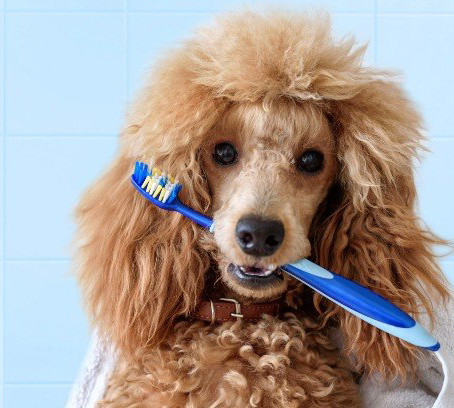 Dicas para cuidar da Higiene Bucal do seu Cachorro