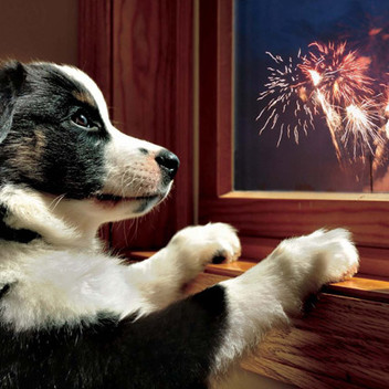 Pets Are Scared of Fireworks And What You Can Do.