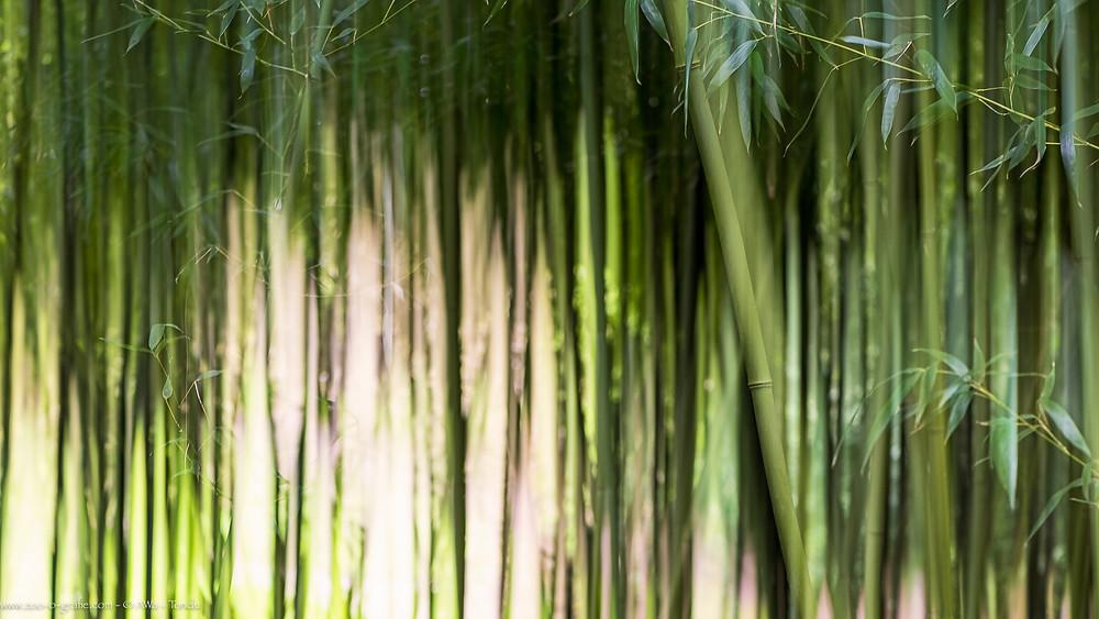Im Bambushain - Botanischer Garten München