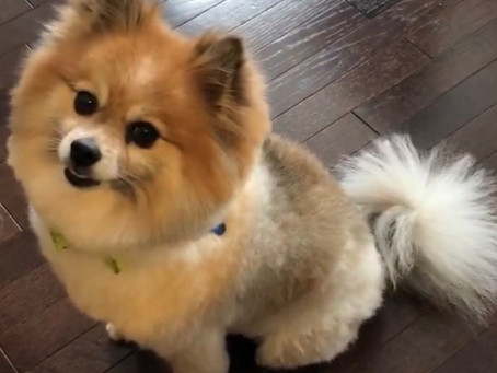 Blog About My Dog