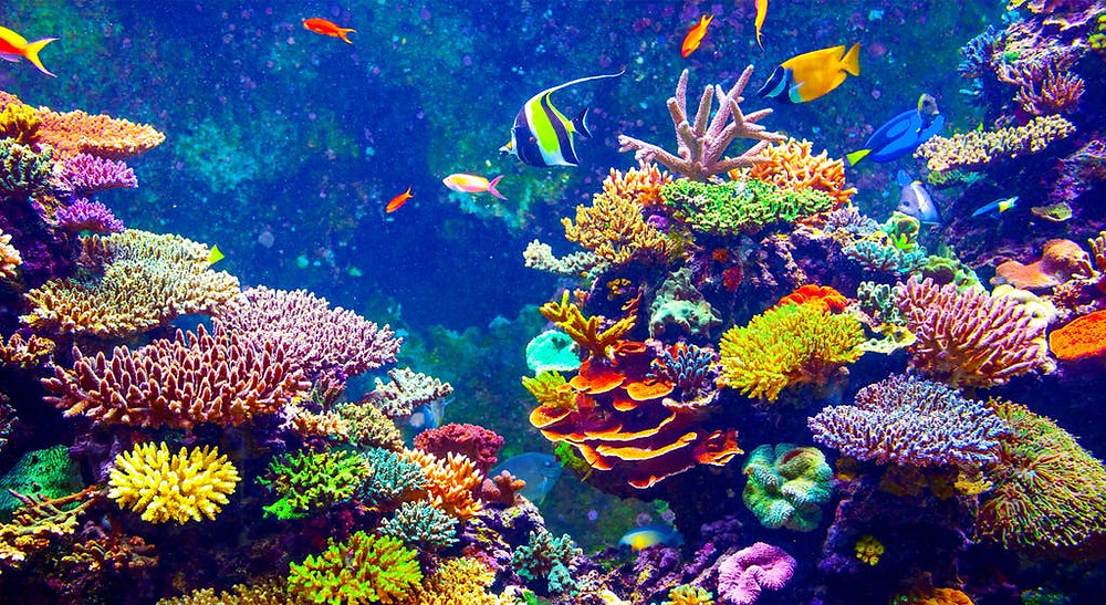 coral reef, global warming, oceans, acidification