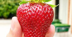 Φράουλες!