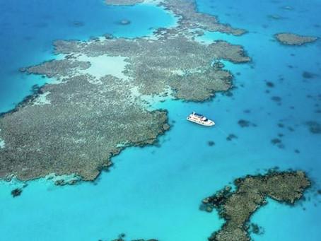 Kingdom Come by (Lesley Murphy) - Saati Adventure Sponsoring Gateway KSA sea trip