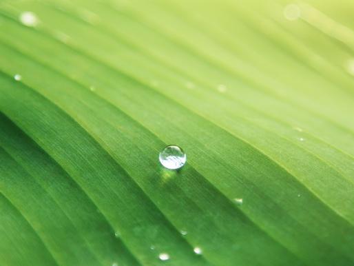 Biomimétisme : valoriser 3,8 milliards d'années d'innovation