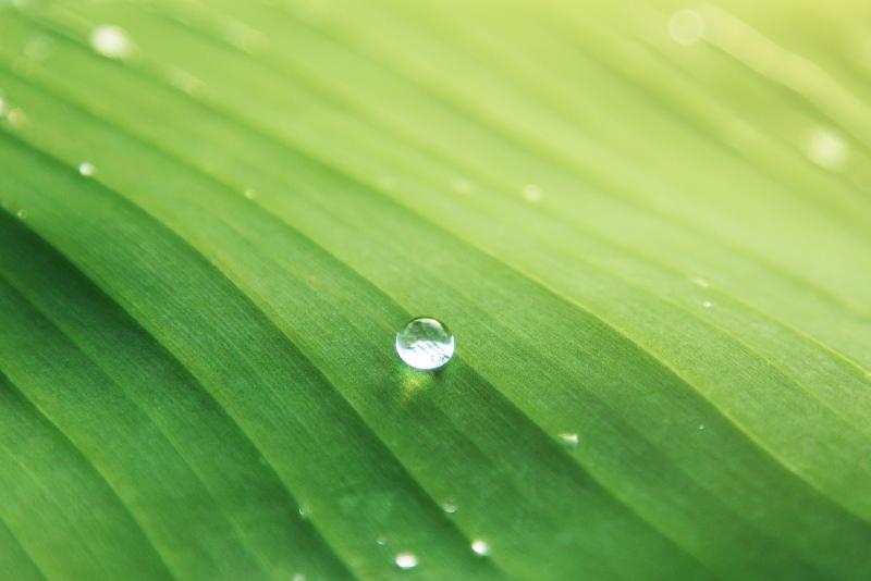 Biomimétisme définition et exemples