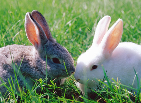 Feeding Your Rabbits - Are You Getting it Right?