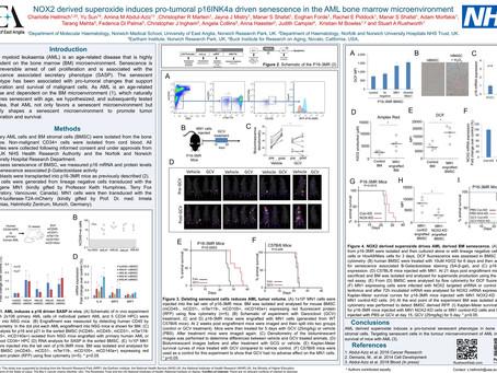 ASH 2018 poster 2770. Hellmich et al. Nox2 driven senescence in AML