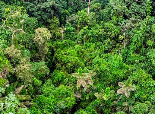 Ecuador consigue $18,5 millones para el cuidado de sus bosques