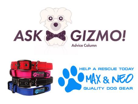 Preguntaste acerca de la marca favorita de productos para perros! Gizmo respondió.
