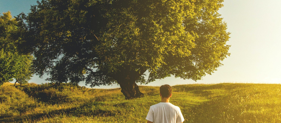 """""""כי האדם עץ השדה"""" -  ט""""ו בשבט כתהליך של טיפול פסיכולוגי"""