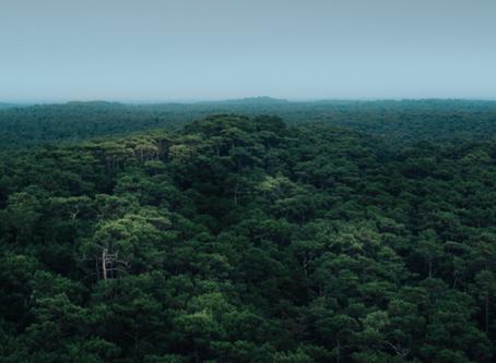 ඇමසන් වැසි වනාන්තරය - Amazon Rainforest