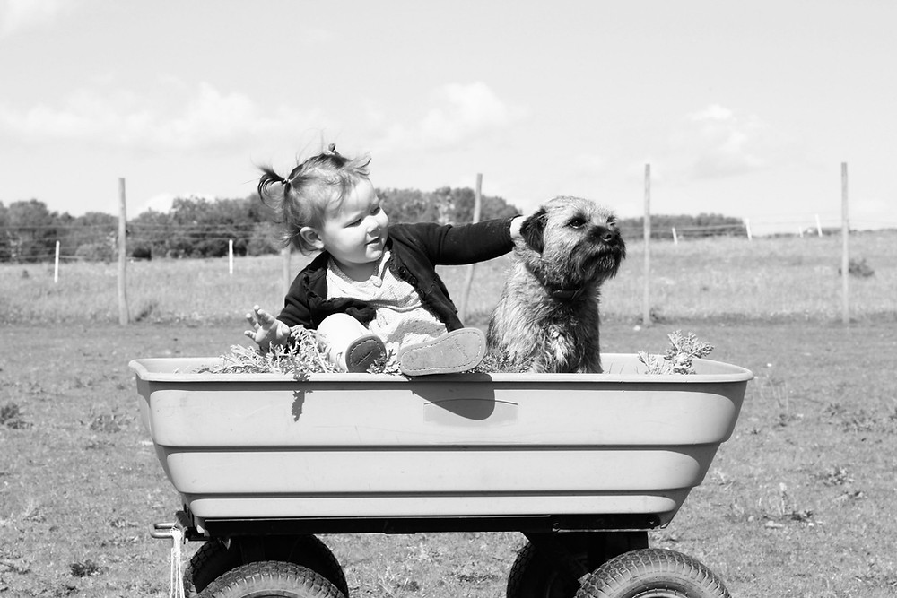 Мало девојче го гали кутрето со кое седи во подвижна детска  приколка