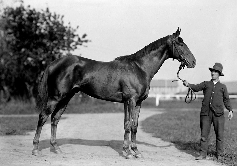 Man o' War, Big Red racehorse. Sire of War Admiral and Hard Tack.