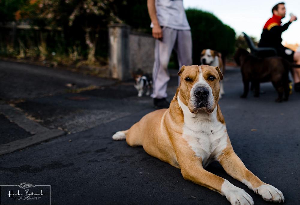 a dog lying on the street