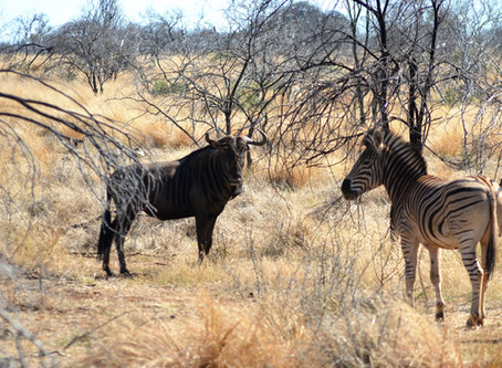 Affordable Africa Hunting Safaris For All.   Making Your Dream Come True