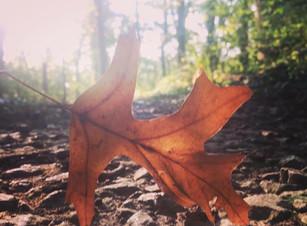 Fall: A season of transition