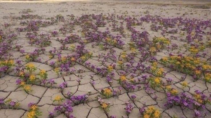 Desert Bloom Unlike Any Other