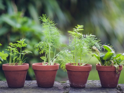 How to Keep Supermarket Herbs Alive: 5 Top Tips