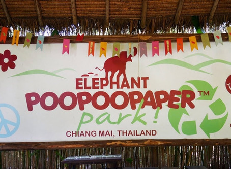 How one Couple Turned Elephant Poop into a Paper Business
