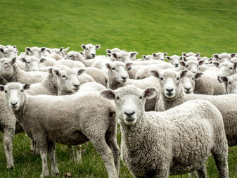 The Herd of Independent Minds