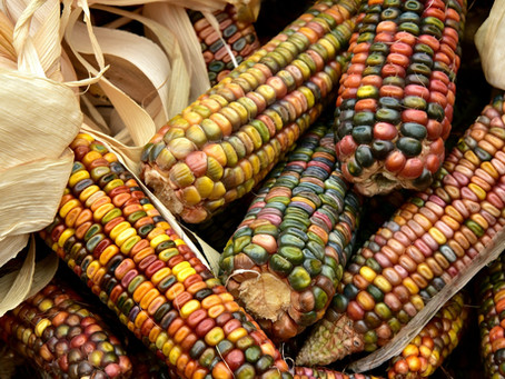 El país con más de 64 razas de maíz