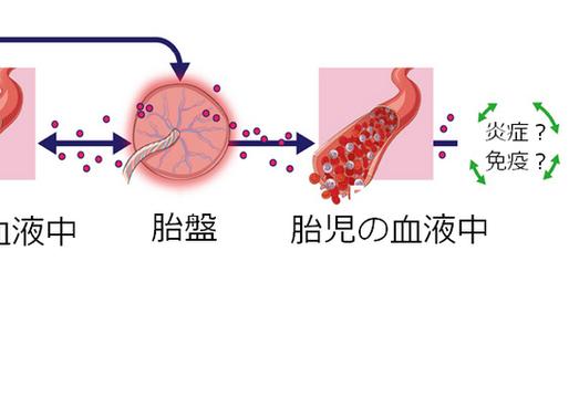 No.2 胎児の大気汚染被害が子どもの喘息を起こす