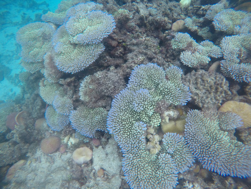 What Can People Do To Try and Reduce Coral Bleaching?