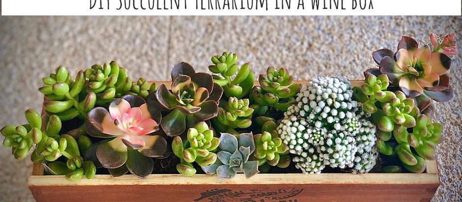 DIY Succulent terrarium in a wine box