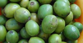 Fruits of the Yucatan