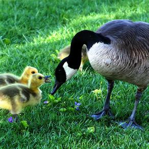 Ouverture exceptionnelle pour la fête des mères