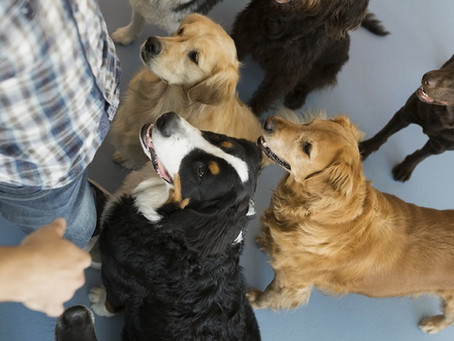 How to find the right obedience class for your pet