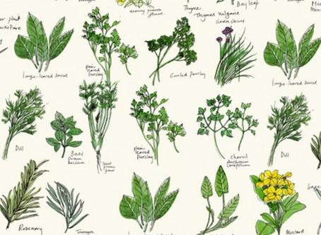 Herbs the wonder ingredient