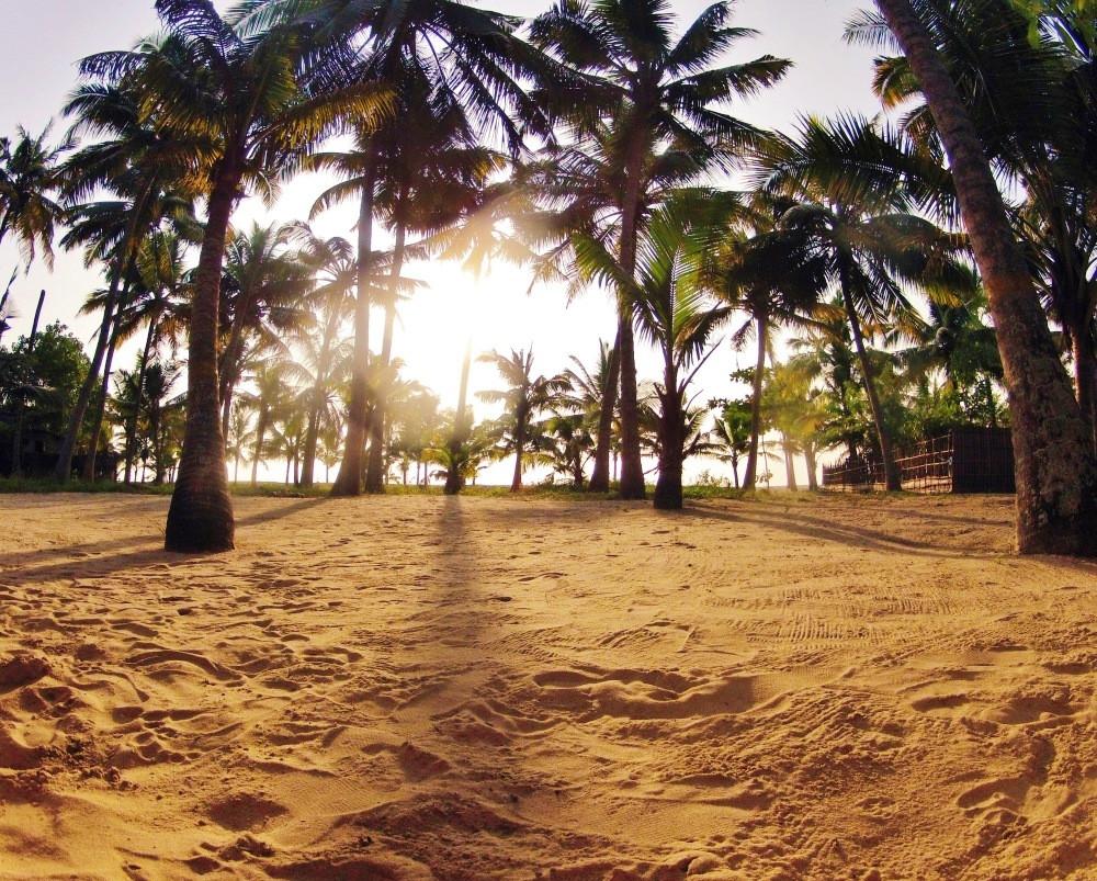 Plages de cherai beach Kerala Inde