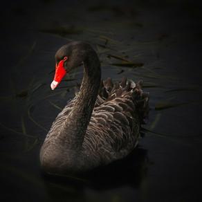 The Black Swan Oder: Die Macht höchst unwahrscheinlicher Ereignisse