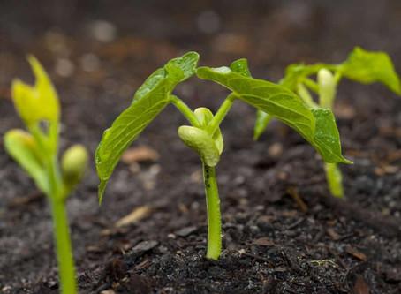 It's planting season at Lesedi Farm