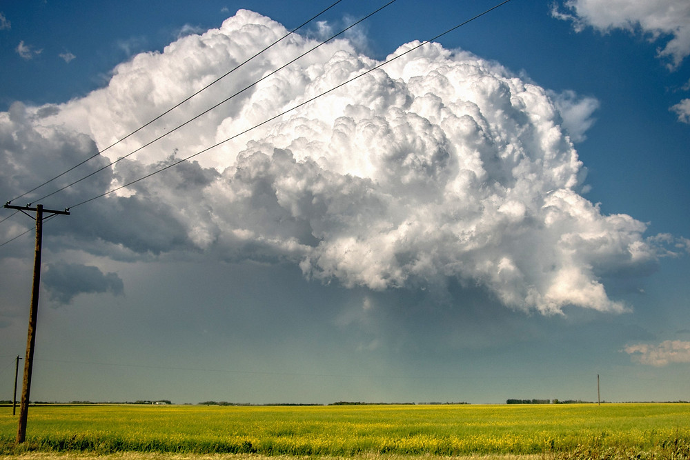 Telephone pole and thunderhead cloud overtop of yellow canola field in Saskatchewan