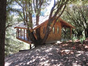 Tree House Tavern