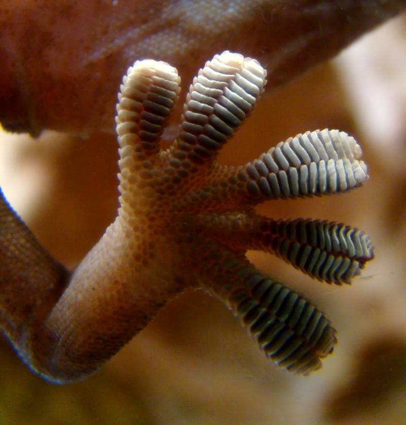 biomimétisme robot technologie