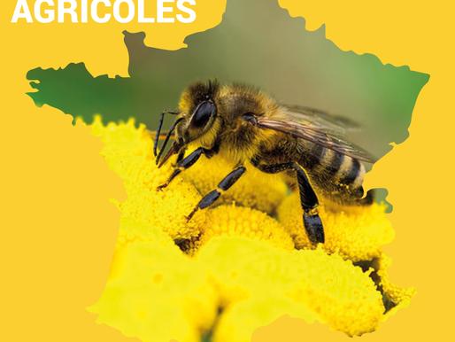 [TFAA] L'abeille, espèce en voie d'extinction