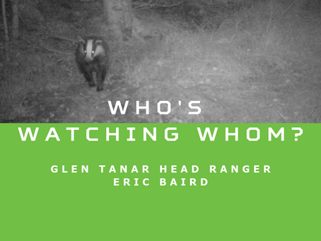 Who's Watching Whom?