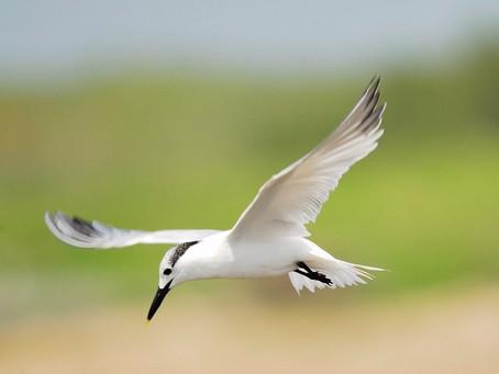 Kaip skraidyti abiem sparnais