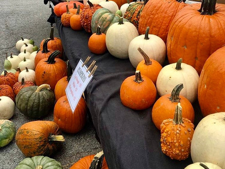 Local Fall Events & Activities