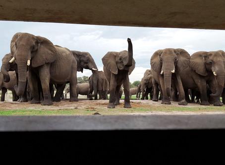 Extraordinary Elephant Encounter