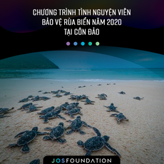 Chương trình tình nguyện viên bảo vệ rùa biển năm 2020