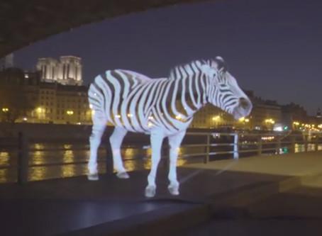 Des animaux dans la ville ... en hologramme