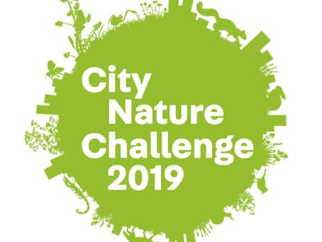 ¡Es oficial! Mazatlán Ciudad Sede del City Nature Challenge, 2019