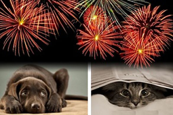 cowering dog and cat under covers with fireworks above