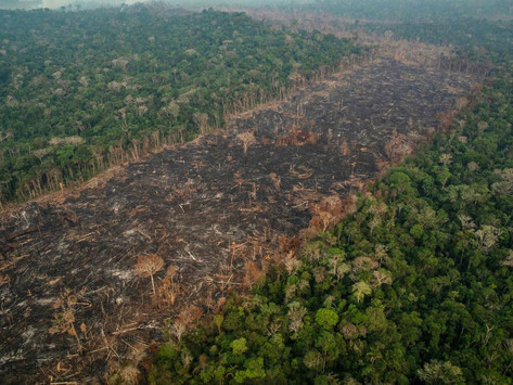 Teses mirabolantes: o vai e vem das conspirações amazônicas